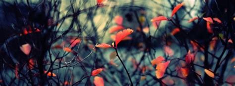 background themes for facebook timeline autumn leaves background facebook cover timeline photo