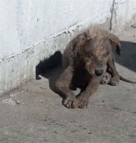 tijuana dogs rescued from streets of tijuana by california rescue pet rescue report