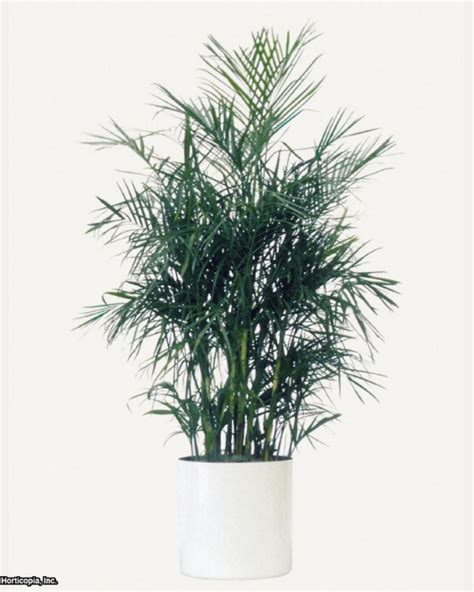 10 houseplants that clean the air urban planters list of the 10 best plants for cleaning indoor air hgtv