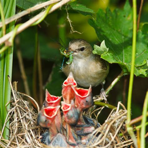 baby birds blackmail parents for more food d brief