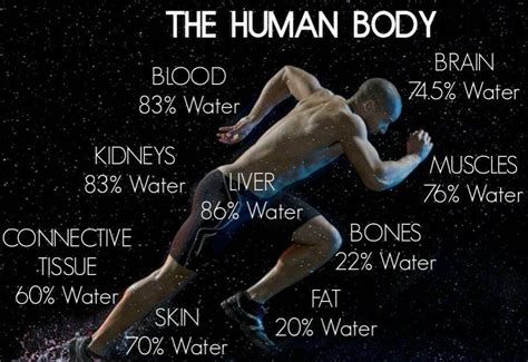 how much water is in the human body depends on many