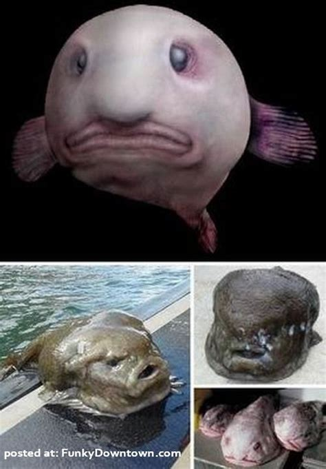 ugliest in the world 6 most strange and ugliest animals in the world things