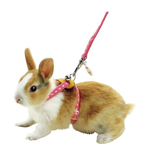 Bunny Collar hamster harness and leash hamster clothes elsavadorla