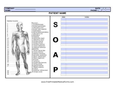 Printable Soap Note With Body Chiropractic Soap Notes Template Free