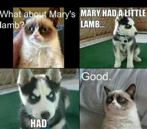 Grumpy Dog Meme - grumpy dog and cat sayings pinterest cats love and dogs