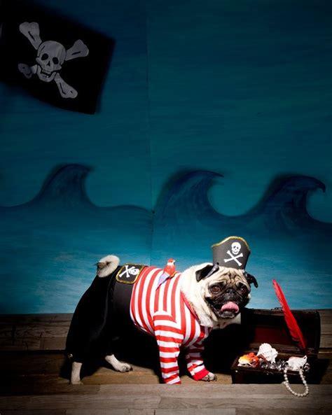 pug pirate costume diy and cat costume ideas the idea room