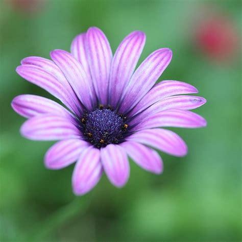 Gamis Purple Flower 1 purple jpg