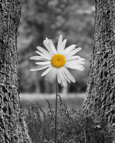 pop of color black white yellow photography artwork flower decor