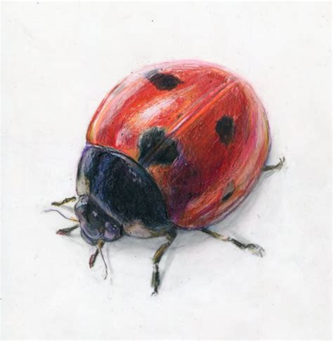 watercolor ladybugs alexis demetriades science