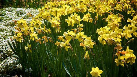 cheekwood botanical garden museum of cheekwood in nashville tennessee expedia