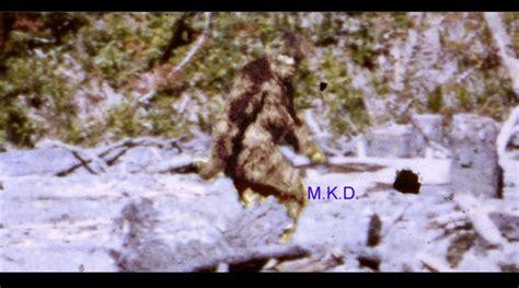 best bigfoot best bigfoot footage related keywords best bigfoot