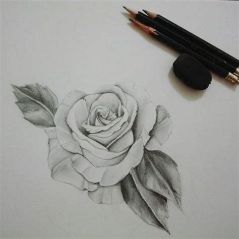 imagenes para dibujar a lapiz de rosas dibujos en lapiz de rosas pictures to pin on pinterest