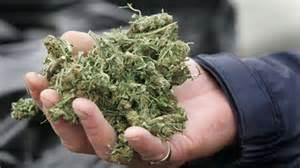 Comfort In Halifax Medical Marijuana Completely Fine Peter Mackay Nova
