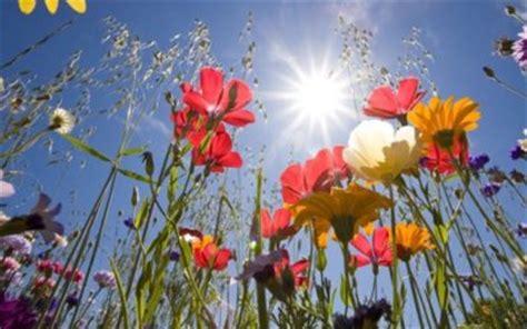 i fiori di bach a cosa servono fiori di bach cosa sono come si usano e soprattutto