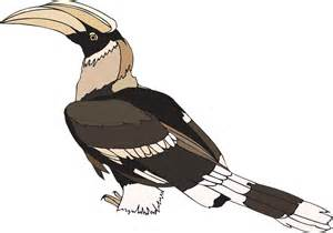 free vector graphic hornbill pied indian bird wings