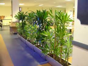 Interior Plant by Skyline Office Design Office Plants Plants For Hire