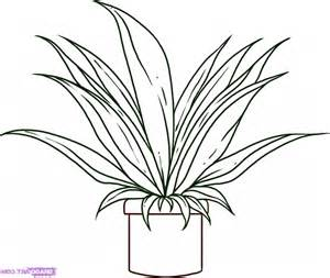 Online Plan Drawing simple plant drawing drawing art gallery