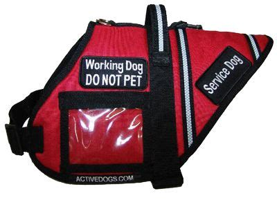 i want to service dogs 1000 images about animal stuff on barking for dogs and for cats