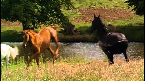 themes black beauty form 1 horse whisperer theme gorge want to learn the flute