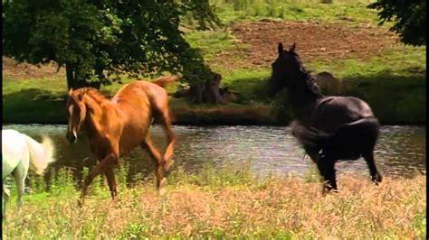 Themes In Black Beauty | black beauty horse whisperer theme youtube
