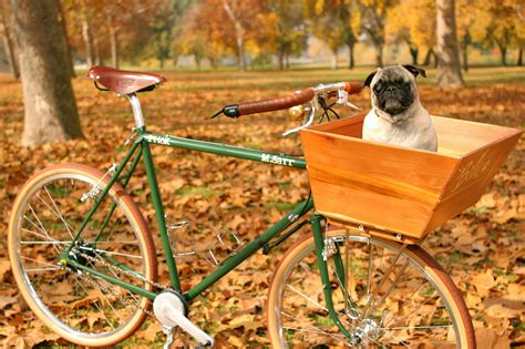 pug cycle accessories for pugs bicycle basket or carrier pugslife