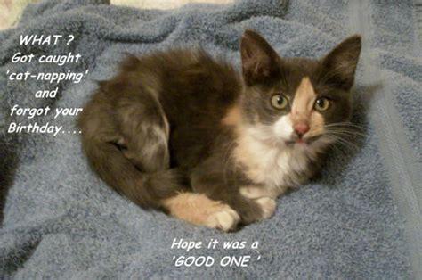 Forgot Birthday Kitten. Free Belated Birthday Wishes