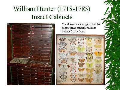 Hunter Cabinets William Hunter 1718 1783 Insect Cabinets