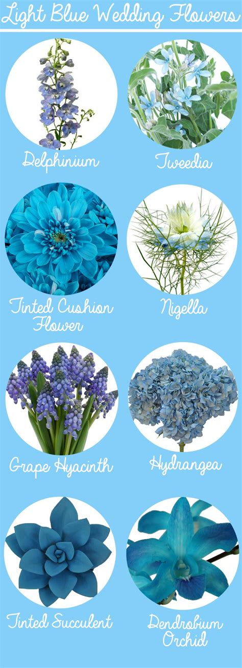 Blue Wedding Flowers Pictures by Blue Colour Flowers Name Www Imgkid The Image Kid