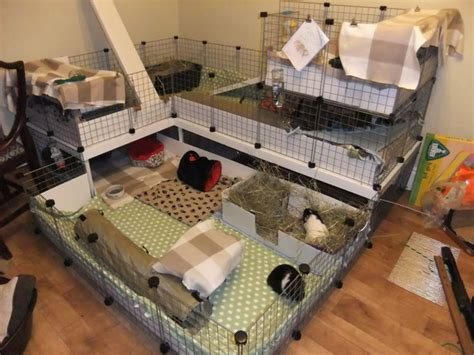 118 Best Guinea Pig Cage Ideas Cavy Diy Images On Guinea Pig House Plans