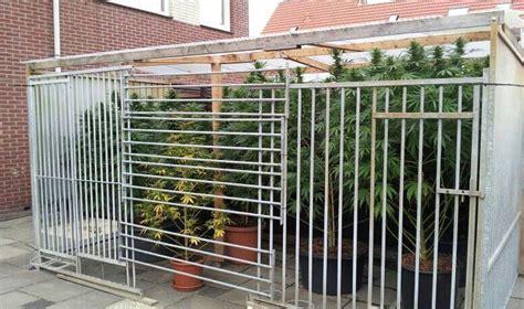 coltivare outdoor in vaso coltivare cannabis al aperto rqs
