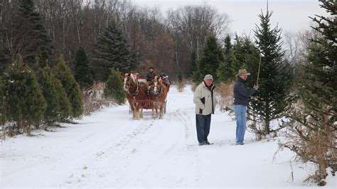 christmas tree farm in chicagoland area cut your own tree near chicago