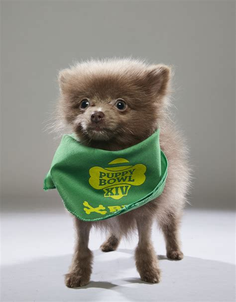 puppy bowl teams meet the dogs in the 2018 puppy bowl s starting lineup for the win