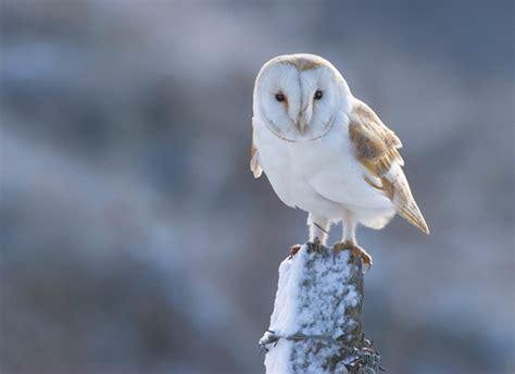 barn owl  english ecards greeting cards