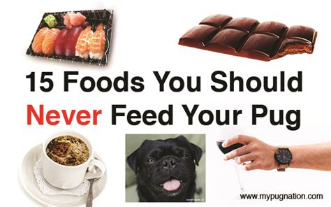 home cooked meals for my pug 15 foods you should never feed your pug mypugnation
