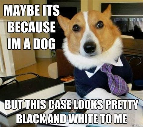 step aside lawyer dog there is a new viral legal meme in