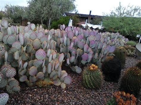 types of botanical gardens different types of cactus picture of desert botanical