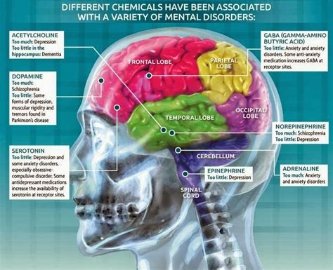 mind and or mental states and physical conditions classic reprint books mental disorders and their brain origins infographics