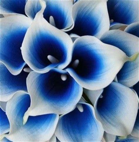 Set Lili Blue Pink the world s catalog of ideas