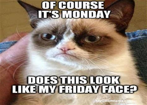 Grumpy Cat Monday Meme - funny monday memes these are awesome mycoolmemes