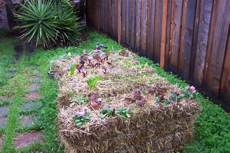 Gardening With Hay Bales Straw Bale Gardening On