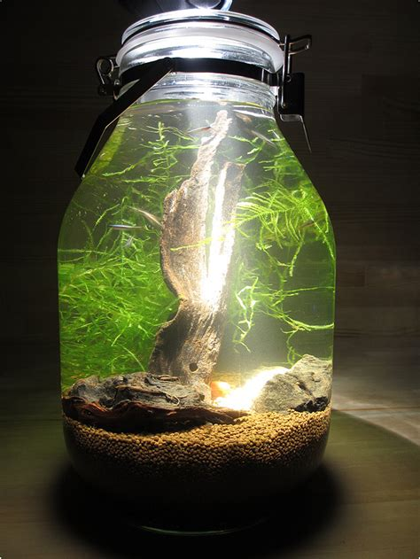 small glass betta aquariums fish tank  light art
