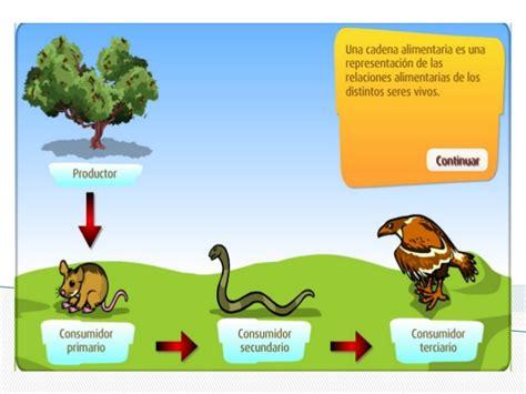 cadena alimenticia red trofica cadena alimenticia