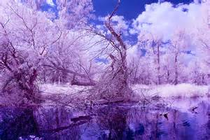 trees infrared lake magical landscape