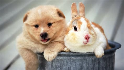 hd cute puppy wallpaper free download jpg desktop background 50 cute dogs wallpapers dog puppy desktop wallpapers