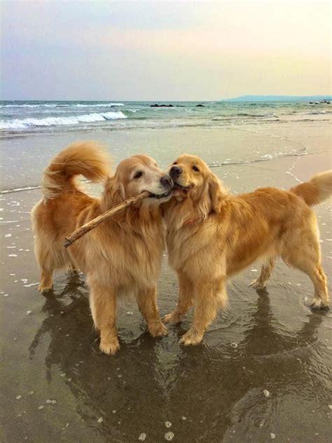 dogs ideas  pinterest dogs  puppies