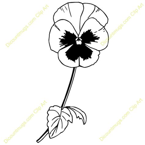 pansy flower clip cliparts