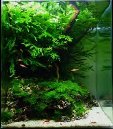 manage your freshwater aquarium tropical fishes and