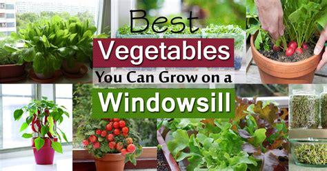 Windowsill Vegetable Gardening   11 Best Vegetables To