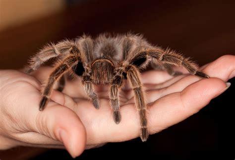 a pet image gallery pet tarantula
