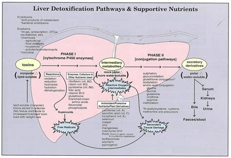Cocaine Liver Detox by Nanay S Diagnosis Functional Liver Detoxification Profile